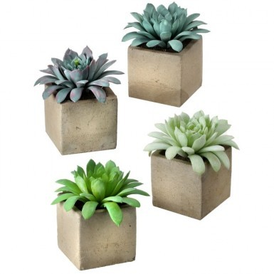 Foliage: Succulents / Cactus